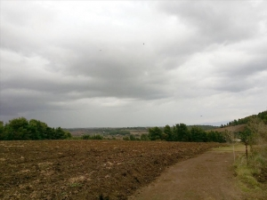 Земельный участок 7700 m² на Кассандре (Халкидики)