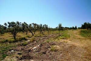 Земельный участок 5000 m² на Ситонии (Халкидики)