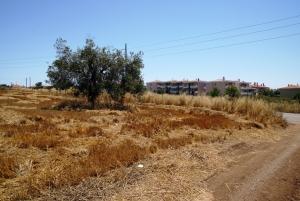 Земельный участок 3200 m² на Кассандре (Халкидики)