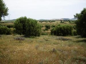 Земельный участок 59063 m² в Халкидиках