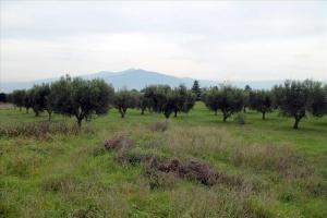 Земельный участок 6077 m² в пригороде Салоник