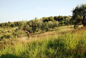 Земельный участок 10774 m² на Кассандре (Халкидики)
