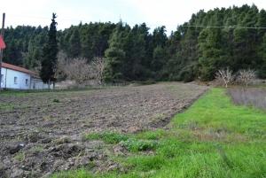 Земельный участок 400 m² на Кассандре (Халкидики)