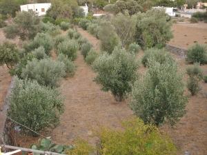 Земельный участок 2230 m² на Додеканес