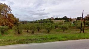 Земельный участок 5800 m² на Ситонии (Халкидики)