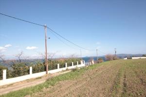 Земельный участок 4200 m² на Афоне (Халкидики)