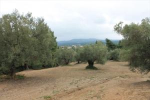 Земельный участок 12000 m² на Кассандре (Халкидики)
