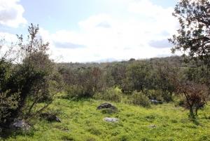 Земельный участок 5200 m² на Крите