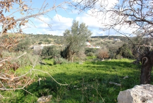 Земельный участок 8000 m² на Крите