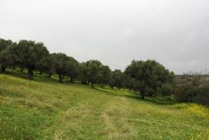 Земельный участок 4014 m² на Крите