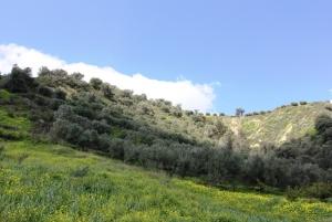 Земельный участок 7494 m² на Крите