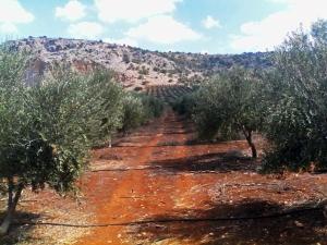Земельный участок 36000 m² на Крите