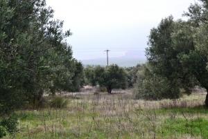 Земельный участок 34000 m² в Халкидиках