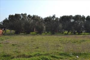 Земельный участок 2000 m² на Кассандре (Халкидики)