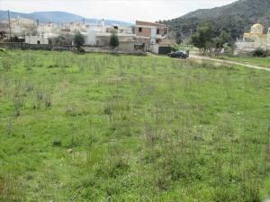 Земельный участок 2600 m² в Аттике