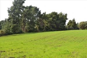 Земельный участок 6750 m² на Кассандре (Халкидики)