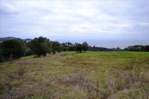 Земельный участок 9500 m² на Кассандре (Халкидики)