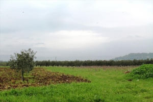 Земельный участок 6930 m² в Салониках