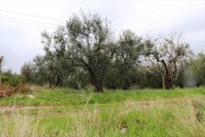 Земельный участок 3678 m² на Ситонии (Халкидики)