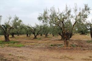 Земельный участок на Ситонии (Халкидики)