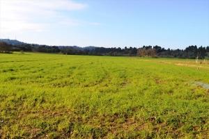 Земельный участок 20000 m² на Кассандре (Халкидики)